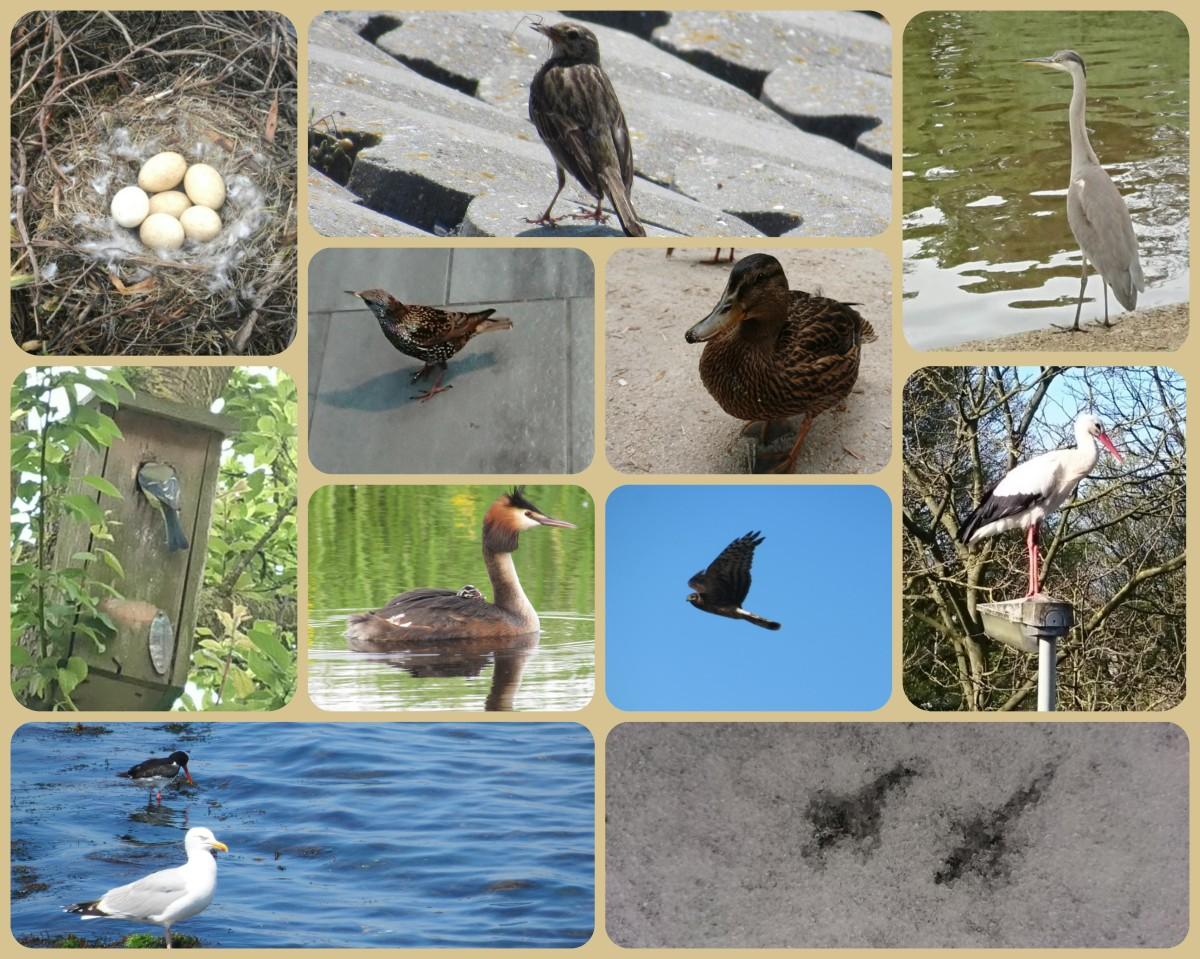 Een week vol vogelactiviteiten